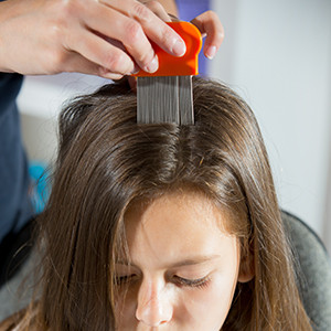 Lice comb on head for traditional comb out